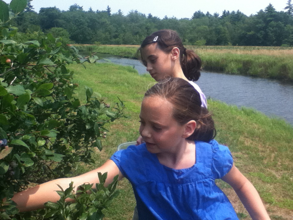 Blueberry Picking at Grandpa's